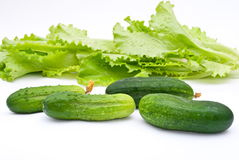 Fresh cucumbers with lettuce salad Stock Photo