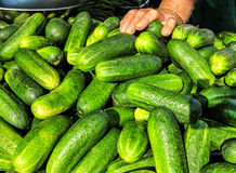 Fresh cucumbers at local market Royalty Free Stock Photos