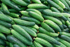 Fresh cucumbers in the market. Royalty Free Stock Photography