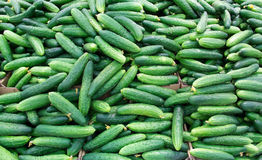 Fresh cucumbers in the market. Stock Photos