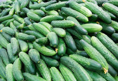 Fresh cucumbers in the market. Stock Photography