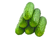 Fresh cucumbers in a pile. On the white background Royalty Free Stock Images