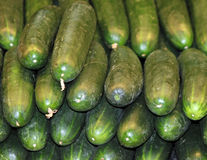 Fresh Cucumbers For Sale at the Market Stock Photos