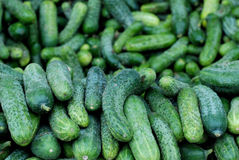 Fresh cucumbers for sale Royalty Free Stock Photo