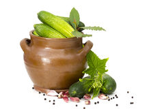 Fresh cucumbers, spices and herbs Stock Photography