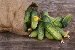 Fresh cucumbers spill out of the bag on an old wooden Stock Photo