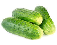 Fresh cucumbers on white background Stock Image