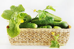 Fresh cucumbers in a wicker basket Royalty Free Stock Photo
