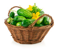 Fresh cucumbers in wicker basket with green Royalty Free Stock Photo