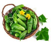 Fresh cucumbers in wicker basket with green Stock Image