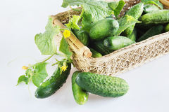 Fresh cucumbers in a wicker basket Royalty Free Stock Photography