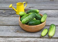Fresh cucumbers in a wooden bowl Royalty Free Stock Photography