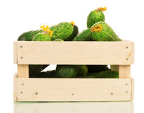 Fresh cucumbers in wooden box isolated on white background. Royalty Free Stock Image