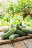 Fresh cucumbers on  wooden box. Fresh cucumbers on old  wooden box. Healthy food concept Royalty Free Stock Photography
