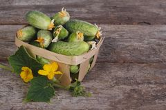 Fresh cucumbers in a wooden container Stock Photography