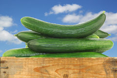 Fresh cucumbers in a wooden crate Stock Images