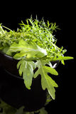 Fresh culinary herbs. Stock Photography