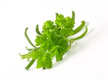 Fresh culinary herbs Stock Images
