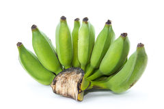 Fresh cultivated banana Stock Image