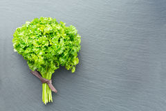 Fresh curled parsley on a dark stone background Stock Photo