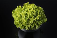 Fresh and curly green letucce. In black background Stock Photo