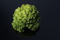 Fresh and curly green letucce. In black background Royalty Free Stock Photo