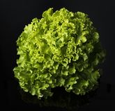 Fresh and curly green letucce. Black background Royalty Free Stock Images