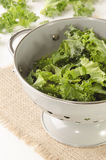 Fresh curly kale in a colander Stock Images