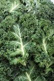 Fresh curly kale Royalty Free Stock Image