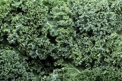 fresh curly kale Royalty Free Stock Photos