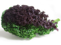 Fresh curly kale leaves Stock Image