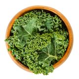 Fresh curly kale leaves in wooden bowl over white royalty free stock image