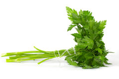 Fresh curly leaf parsley Stock Images