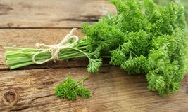 Fresh curly organic parsley Royalty Free Stock Images