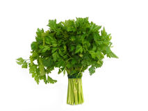 Fresh curly parsley. Isolated over white background Royalty Free Stock Photography