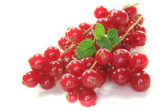 Fresh currant Stock Photography