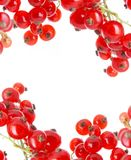 Fresh currant Royalty Free Stock Image