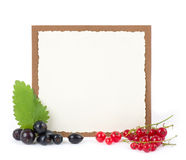 Fresh currant with banner Royalty Free Stock Image