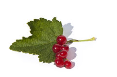 Fresh currant berries with leaf Royalty Free Stock Photo