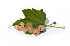 Fresh currant berries with leaf Stock Photography
