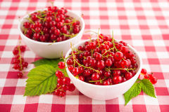 Fresh currant berry Royalty Free Stock Photos