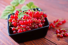 Fresh currant Stock Images