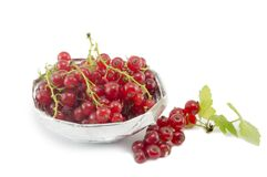 Fresh currant fruit in a shiny bowl isolated Royalty Free Stock Image