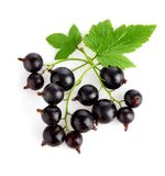 Fresh currant fruits with green leaves Stock Photography