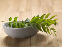 Fresh curry leaf Royalty Free Stock Photography