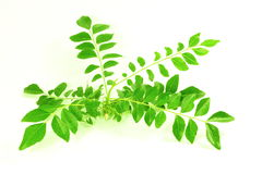 Fresh curry leaves or curry patta herb closeup on white background Stock Image