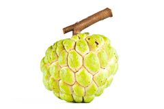 Fresh custard apple Royalty Free Stock Image