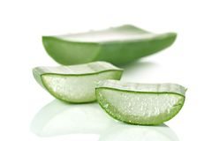 Fresh cut Aloe Vera slices Royalty Free Stock Image