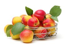 Fresh apricot fruits. Fresh cut apricot fruits isolated on white background, with clipping path royalty free stock photo