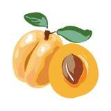 Fresh cut apricot fruits isolated on white background Stock Photography